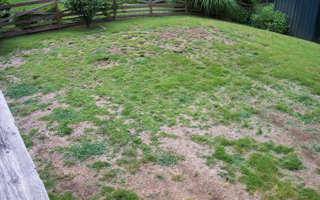 Diagnosing and Managing Brown Patches on Your Lawn