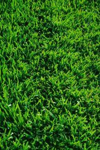 Green Grass ca. 2000