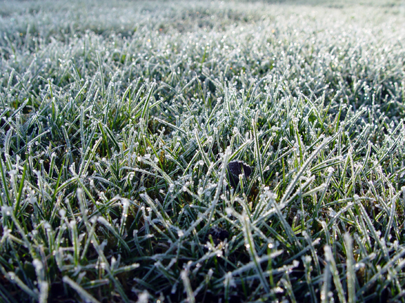 7 Tips for Winterizing Your Lawn and Landscape
