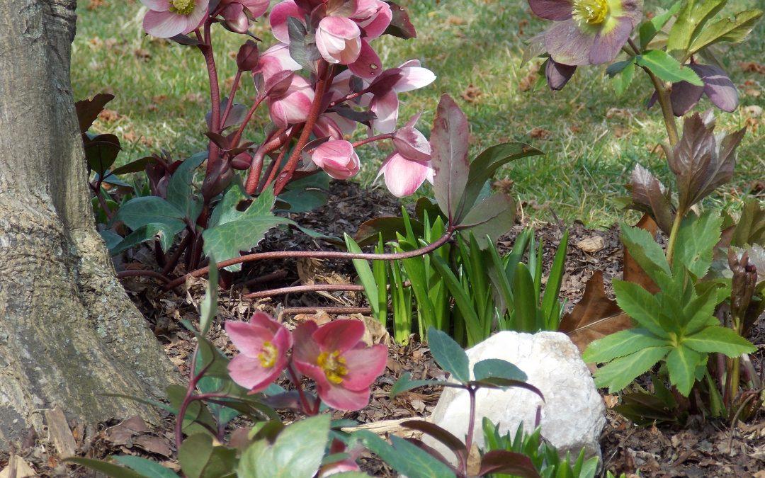 Spring LAWN BLOG – APRIL 2014