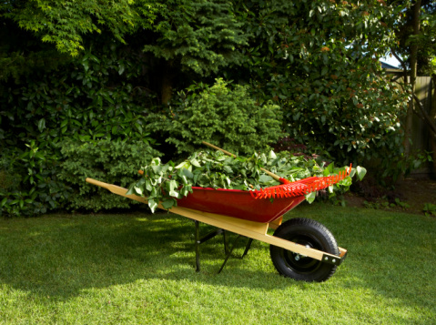 Red Wheel Barrow with Foliage and Grass