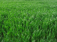 The importance of aerating your lawn