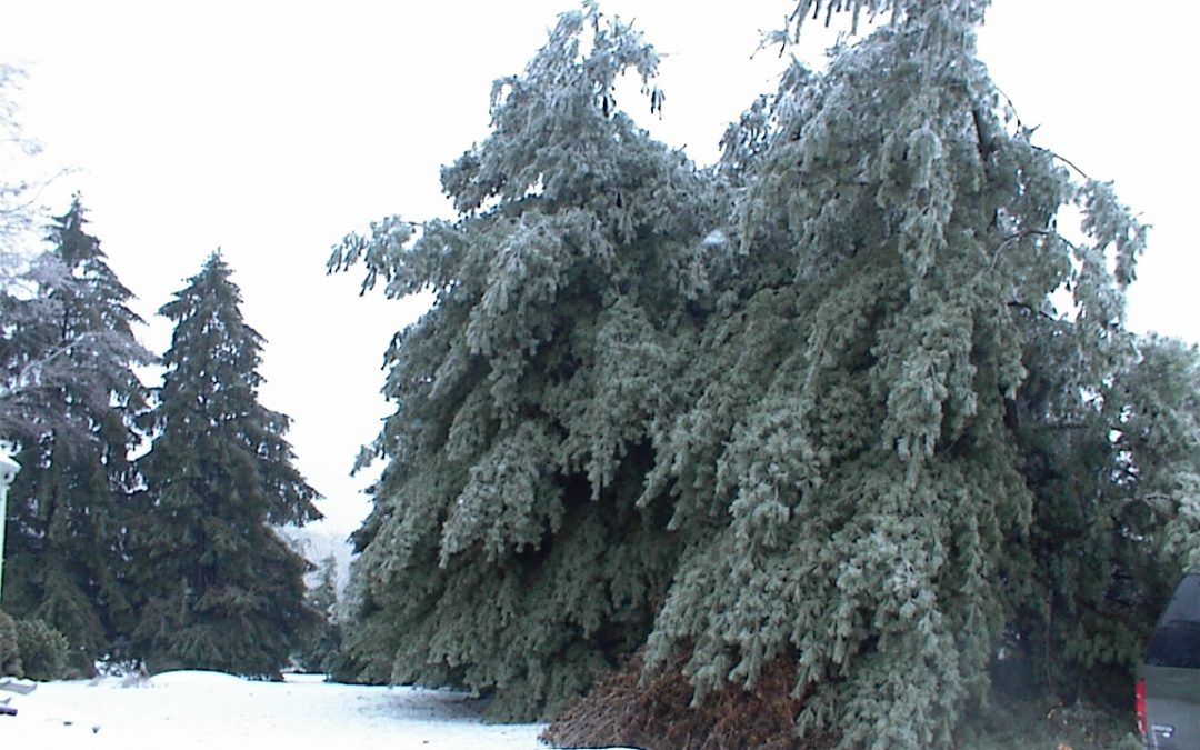 Winter Weather Effects on Your Lawn