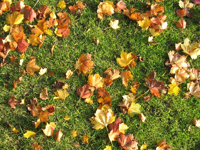 Important Information about Your Fall Lawn Care